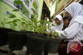 Riau siapkan dua juta bibit tanaman gratis
