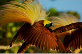 Burung liar bebas beterbangan di Waifoi-Warimak, Raja Ampat