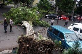 Dinas Lingkungan Hidup Ngawi Pangkas Pohon Rawan Tumbang