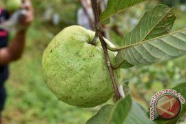Jurus jitu singkirkan pestisida dari makanan Anda
