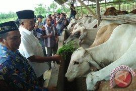 Kepala DKPP Lhokseumawe ditetapkan tersangka kasus ternak