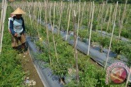 Kementan miliki inovasi daya tahan komoditas hortikultura pascapanen