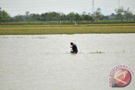 22 hektare sawah di Desa Malik Bangka Selatan terendam banjir