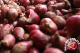Harga bawang merah di Jambi naik