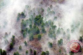 Riau perpanjang status siaga kebakaran hutan-lahan