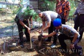 Polres Trenggalek Tanam Ribuan Bibit Mangrove Pantai Cengkrong