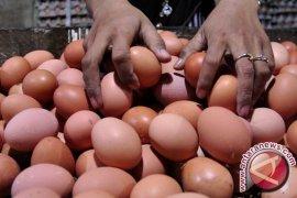 Wali Kota : Medan Bebas Dari Telur Palsu