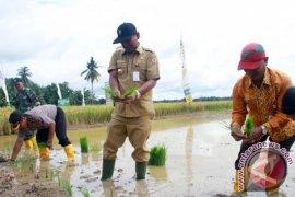 Pemerintah Dorong Petani Gunakan Pupuk Bersubsidi