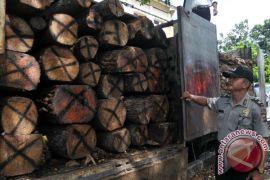 Greenpeace desak pengawasan kehutanan diperkuat
