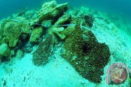 Pemerintah diminta lebih proaktif lestarikan terumbu karang