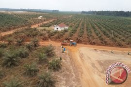 IUP Revocation Can Affect Investment in South Kalimantan