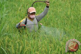Produksi padi Sumut capai 4,6 juta ton