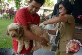Vaksinasi Rabies di Denpasar