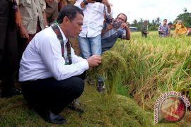 Mentan panen perdana padi lebak di Kalsel
