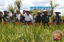 Produksi padi Kaltim naik 31,04 persen