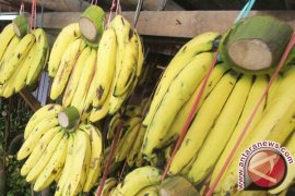 Peneliti Indonesia bilang kulit pisang bisa bantu atasi depresi