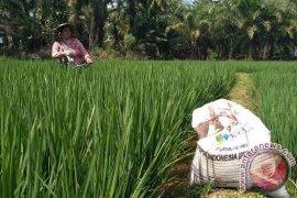 Distan Mukomuko bantu petani atasi hama wereng