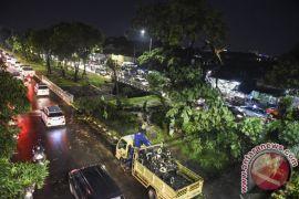 Hujan lebat kembali tumbangkan lima pohon di Bandung
