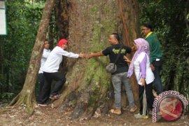 Penajam Jadikan Pohon Agathis Ikon Wisata Alam