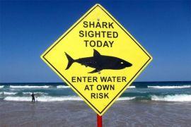 Lomba selancar di Australia batal karena hiu