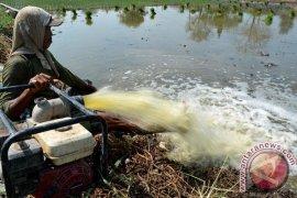 Kebutuhan Air Lahan Persawahan Penajam Belum Terpenuhi