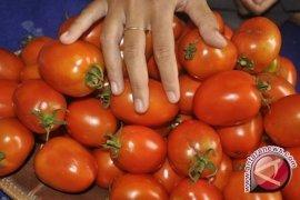 Tomat, buah seksi dengan jutaan kontroversi