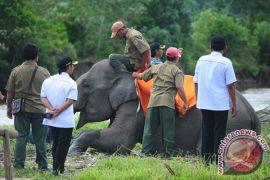 Wisatawan keluhkan jalan rusak menuju wisata gajah