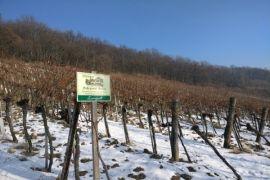 Kebun anggur Lisabon rugi sembilan juta euro akibat gelombang panas