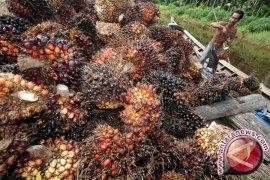 Suksma, Amerika ikuti China-Pakistan impor sawit Indonesia