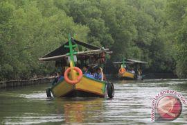 Luhut canangkan gerakan nasional rehabilitasi mangrove