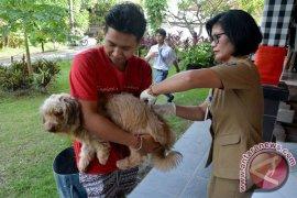 Dinas Pertanian Denpasar adakan vaksinasi rabies serentak