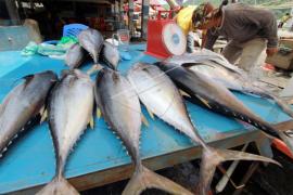 Harga Ikan di Singkawang Melambung
