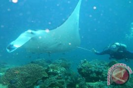 Berniat Mencari Bangkai Pesawat, Malah Mendapat Potensi Ikan