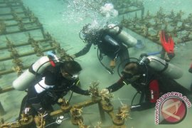 DKP rehabilitasi terumbu karang Taman Laut Nukila