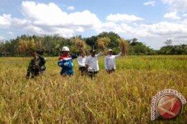 YABN helps farmers develop organic farming