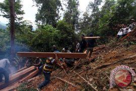 Myanmar sita 6.600 ton kayu ilegal