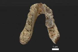 Ilmuwan gali asal-usul manusia dari Mediterania