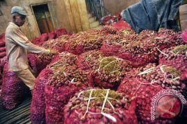 Cegah harga anjlok, alumni IPB beli 2,5 ton bawang merah