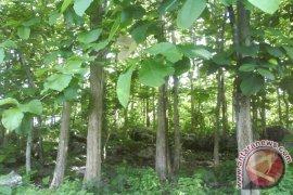 Lembaga Desa Di Tabalong Kelola Hutan