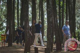 Pemda: hutan pinus di Mangunan tidak memungkinkan disadap