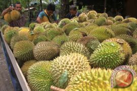 Balitbangtan pertahankan plasma nutfah durian lokal