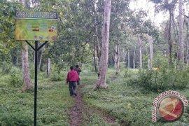 Pengelolaan hutan wisata Madapi libatkan warga lokal
