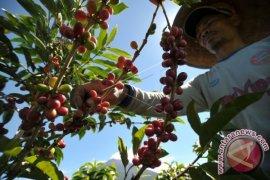 Petani kopi dibina tingkatkan produksi Arabika Kerinci
