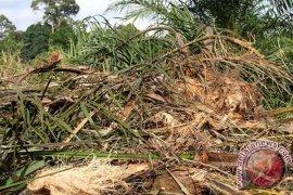BKSDA Bengkulu-Lampung Tebang Sawit Liar Cagar Alam