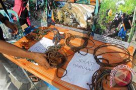 """""""Tigerheart"""" patroli jerat harimau di Bengkulu"""