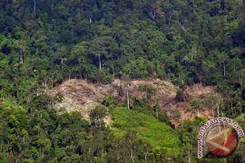 Walhi Sumsel prihatin kerusakan hutan masih berlanjut