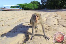 Ada sejumlah luka di tubuh monyet ganas Bekasi