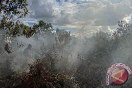 Greenpeace minta pemerintah lindungi gambut secara total