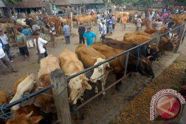 Pengrajin tusuk sate di Bogor kebanjiran pesanan
