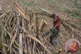 4.500 ton gula petani dibeli Bulog Cirebon
